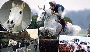 Desert Orchid - Hall of Fame