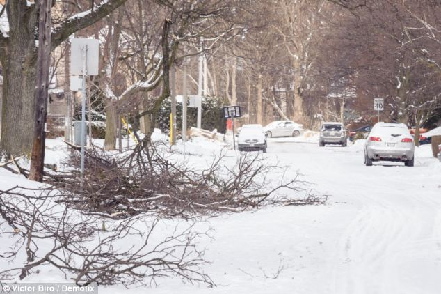Blanketed: A Toronto street is covered with snow and broken tree limbs ahead of New Year celebrations