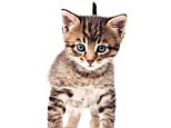 Biologist Dr John Bradshaw believes when cats are affectionate towards their owners they are treating them as other cats