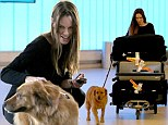 Makeup free Hilary Swank dotes on enthusiastic pooch as she wrangles ENORMOUS pile of luggage at LAX after jetting in from Paris