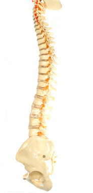 spine disorders, osteoporosis