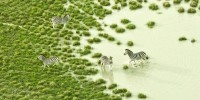 The African Savannah Is Even More Beautiful From a Bird's-Eye View
