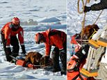 The crew from a Coast Guard ice cutter have saved a dog that was frozen in Lake St. Clair in Michigan and had been stuck in the ice for days.
