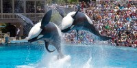 Proposed California Law Would Free SeaWorld's Orcas