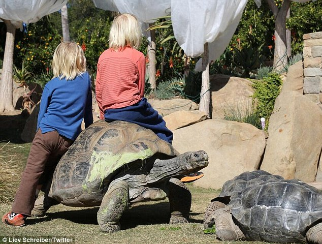 Excuse me: The Schreiber boys lean and sit on a turtle as it looks to make a get-away