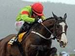 Fatal: Our Conor (pictured last year) died on during the Champion Hurdle on Tuesday at Cheltenham Festival