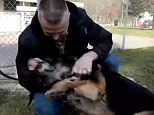 A retired soldier flew thousands of miles to reunite with the intrepid German shepherd that served alongside him in Iraq and the touching footage has quickly gone viral.  Retired Air Force Sergeant David Simpson made a best friend in the form of military pooch Robbie as the two served together securing dangerous city streets in Iraq for four years.  But their beautiful relationship came to an abrupt halt a year ago when Simpson left the military and his canine comrade continued to serve.
