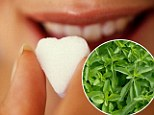 The 'miracle' ingredient, stevia, is between 250 and 300 times sweeter than sugar