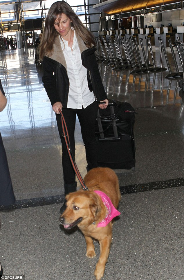 I'm with her: Golden Retriever mix Rumi looked cute in a pink scarf