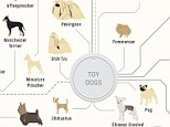 From terriers to toys - such as pugs, pomeranians and shih tzus (pictured in this portion of the chart) - and mountain dogs to sight hounds, the dog family tree delineates almost every standard pure-breed dog so you can see how one dog is connected to another