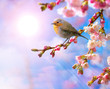 abstract Spring border background with pink blossom
