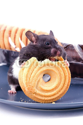 Hamster likes cakes