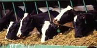 Farm-Drug Companies Agree to Antibiotics Ban. More of the Same, or Fresh Start?