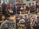 Floyd Mayweather referees kids sparring