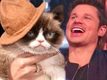 'This is the end of civilisation as we know it!' Nick Lachey left bewildered when snoozing Grumpy Cat gets a better seat than him at MTV Movie Awards