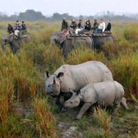 Assam Wildlife Tour 4 N /5 D