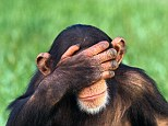 Scientists at the Kyoto University Primate Research Institute pitted chimps against humans in competition in a simple game of hide-and-seek called the Inspection Game. They discovered our distant ancestors are better at predicting how opponents will behave, and remembering the tactics their rivals used previously