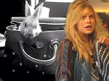 Safe and sound:  Cara Delevingue's pet bunny showed that he was on best behaviour as he snuggled inside a Mulberry bag