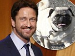 'She's a little Pug and she's beautiful': Gerard Butler suits up to discuss his pet pooch Lolita on Late Night with Seth Meyers
