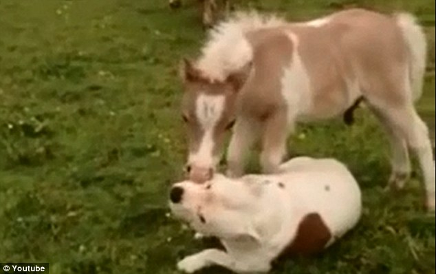 Spring clean: The horse is seen in the video giving its new friend a quick wash