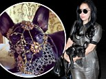 Her favourite accessory! Lady Gaga steps out with pet pooch Asia...as PETA blasts her for draping jewelry on dog