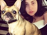 Fit for animals: Lady Gaga tweets about watching her controversial unreleased music video with dogs (which was branded as like an 'ad for rape')