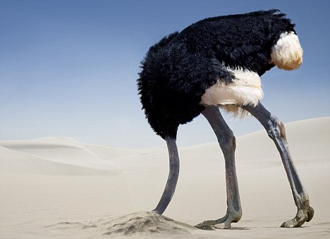 ostrich-in-the-sand