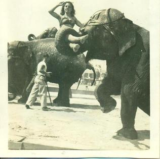 Ringling Bros. circus performer rides Babe, her elephant.