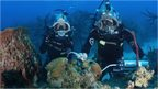 Divers conducting experiments underwater