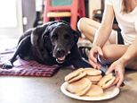 'I died today. And I ate a lot of hamburgers': Houston Labrador retriever Dukey recently became the subject of a photo series documenting his last day on Earth