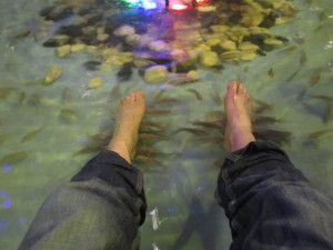 Fish nibbling on my feet