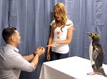 Mitch takes the ring from the penguin and proposes to Casey