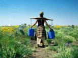 An old-fashioned yoke helps balance the load as a woman carries water supplies across a field of meadow flowers