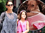 That's one lucky pup! Suri Cruise's pet Chihuahua found alive and well in coyote-riddled hills