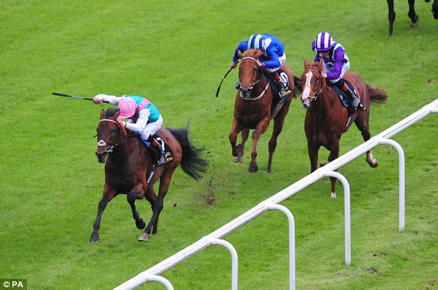 Star: Kingman, pictured winning the 2,000 Guineas at Curragh, will be a fan's favourite on Sunday