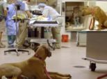 Friends: The puppy was close by as her fiend emerged from the anaethisia after surgery, according to zoo officials