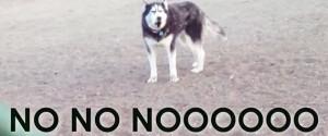 Husky Dog Park