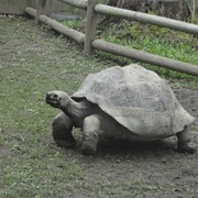 Tortise at the zoo!