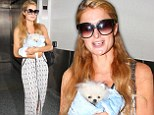 Well it was quite an investment! Paris Hilton protects new $13,000 miniature Pomeranian by cradling him in a blanket while touching down at LAX