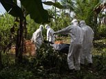 TOPSHOTS A specialized Ebola inhumation team carry the body of a recent Ebola victim to be buried, on October 6, 2014 in Magbonkoh. Ebola may only be present in a few African nations, but fears over the crippling outbreak are infecting economies across the continent and may put its envy-inducing growth prospects at risk.    AFP PHOTO FLORIAN PLAUCHEURFLORIAN PLAUCHEUR/AFP/Getty Images