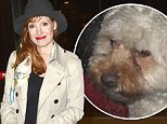 UK CLIENTS MUST CREDIT: AKM-GSI ONLY\nEXCLUSIVE: Los Angeles, CA - Actress, Jessica Chastain, looked tres chic as she departed out of LAX with her dog.  She was dressed in burgundy skinny leather pants, black shirt, tan trench coat, black booties, butterfly print silk scarf, and a black hat.\n\nPictured: Jessica Chastain\nRef: SPL864324  121014   EXCLUSIVE\nPicture by: AKM-GSI / Splash News\n\n
