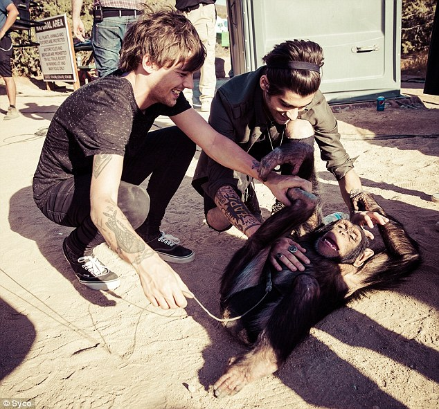 A lot of love: Louis and Zayn Malik are seen playing with the primate in stills from the video shoot