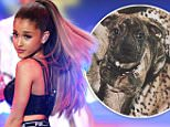 Strict embargo, not to be used before 21:00 GMT 02 Dec 2014 - Editorial Use Only, No Merchandising.. Mandatory Credit: Photo by David Fisher/REX (4273353u).. Ariana Grande performing.. Victoria's Secret Fashion Show, London, Britain - 02 Dec 2014.. ..