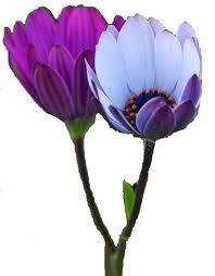 womens-fellowship-flowers