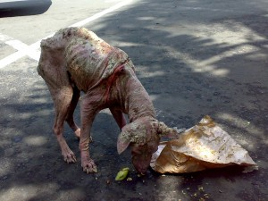 Best Home Remedy For Dog Mange