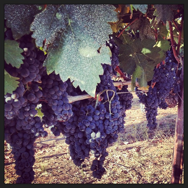 Wine tasting near Chico! New Clairvaux #like #love #wine #wine tasting #winery #chicoca #cheers