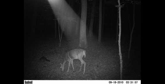 Trail Cam anomalies