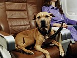 Woman on airplane with dog on leash in adjoining seat