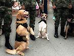 哥伦比亚军犬上街卖萌