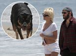 EXCLUSIVE TO INF. ALL-ROUNDER...June 8, 2014: Pam Anderson and Rick Solomon spend the afternoon on the beach with their beloved pooches as the lovebirds kiss, frolic, and do cartwheels on the sand...Mandatory Credit:  Lazic/Borisio/INFphoto Ref: infusla-257/277 sp EXCLUSIVE TO INF. ALL-ROUNDER.